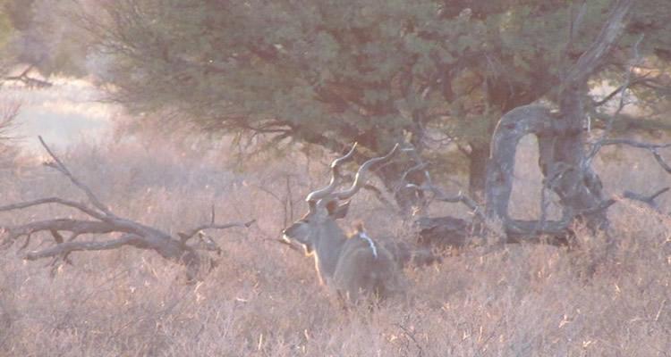 Caçada africana: Kalahari – Final